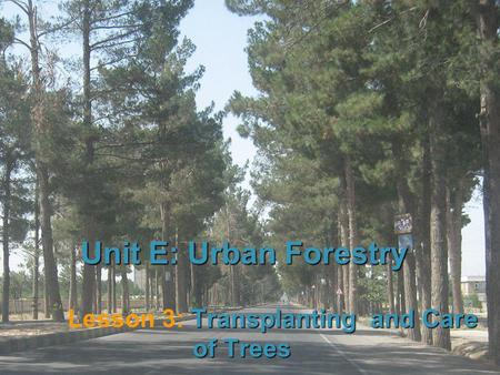 1 Unit E: Urban Forestry Transplanting and Care of Trees Lesson 3: Transplanting and Care of Trees.