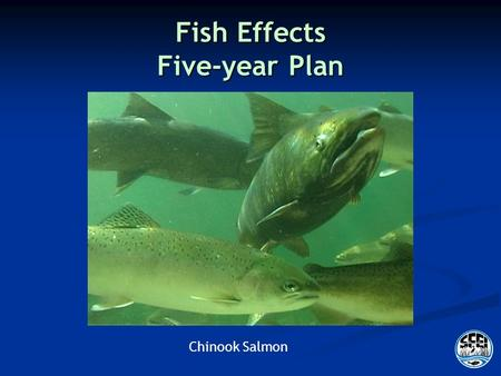 Fish Effects Five-year Plan Chinook Salmon. Outline Management and Regulatory Context Management and Regulatory Context RMP objectives RMP objectives.