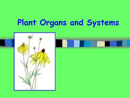 Plant Organs and Systems