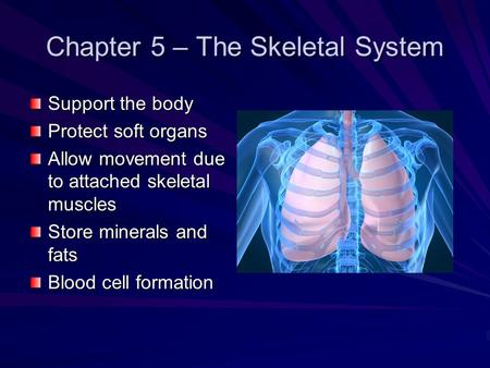 Chapter 5 – The Skeletal System