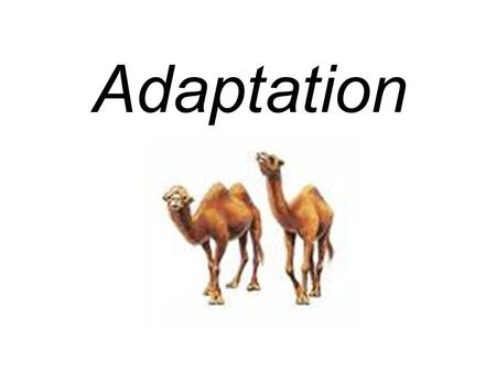 Adaptation. Amphibian A special trait that helps an organism survive.