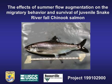 The effects of summer flow augmentation on the migratory behavior and survival of juvenile Snake River fall Chinook salmon Project 199102900.