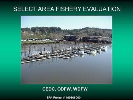 SELECT AREA FISHERY EVALUATION BPA Project # 199306000 CEDC, ODFW, WDFW.