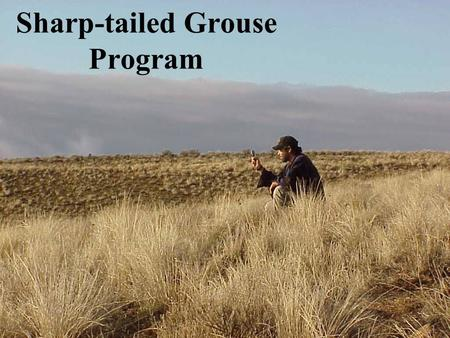 Sharp-tailed Grouse Program. Project Overview Our goal is to preserve and enhance viable Sharp-tailed grouse populations on suitable habitat within their.