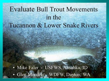 Mike Faler - USFWS, Ahsahka, ID Glen Mendel - WDFW, Dayton, WA Evaluate Bull Trout Movements in the Tucannon & Lower Snake Rivers.