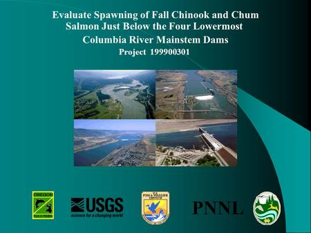 Evaluate Spawning of Fall Chinook and Chum Salmon Just Below the Four Lowermost Columbia River Mainstem Dams Project 199900301 PNNL.