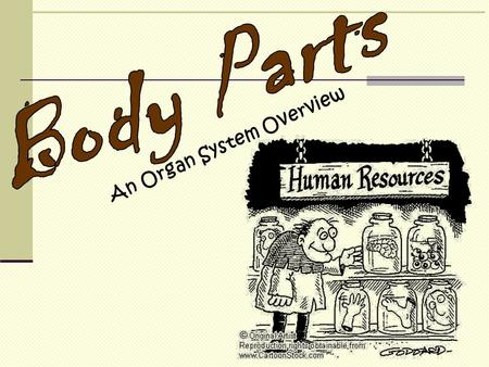 Body Parts An Organ System Overview.