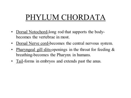 PHYLUM CHORDATA Dorsal Notochord-long rod that supports the body-becomes the vertebrae in most. Dorsal Nerve cord-becomes the central nervous system. Pharyngeal.