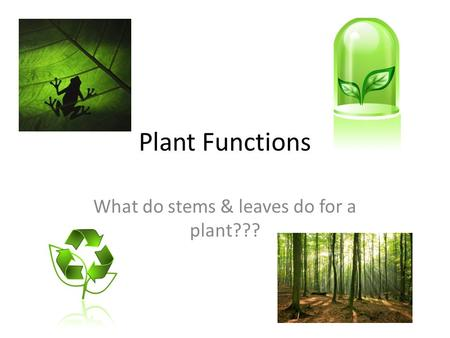 Plant Functions What do stems & leaves do for a plant???