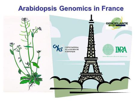Arabidopsis Genomics in France. Physiological role Expression microarrays Systematic functional analysis: from genome to function Reverse genetics Gène.