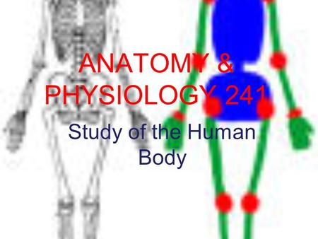 ANATOMY & PHYSIOLOGY 241 Study of the Human Body.