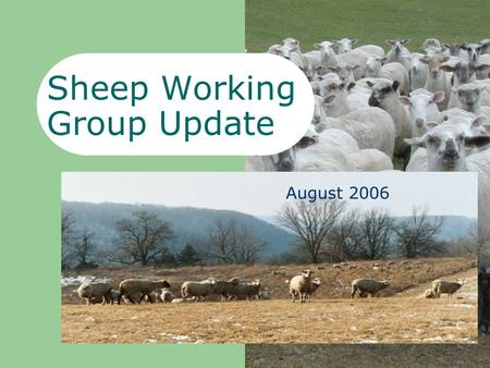 Sheep Working Group Update June 2006 August 2006.