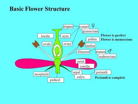 Basic Flower Structure