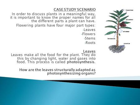 CASE STUDY SCENARIO In order to discuss plants in a meaningful way, it is important to know the proper names for all the different parts a plant can.