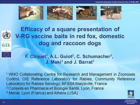 Towards the elimination of rabies in Eurasia, Paris, 27-30 May 2007 1 Efficacy of a square presentation of V-RG vaccine baits in red fox, domestic dog.