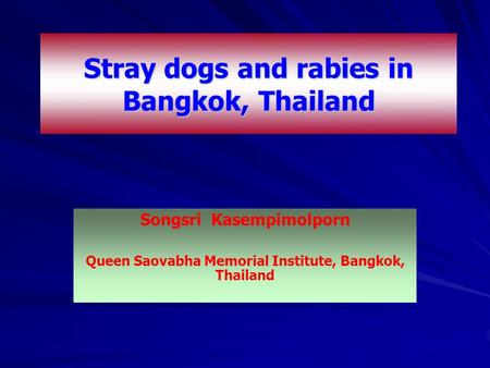 Stray dogs and rabies in Bangkok, Thailand