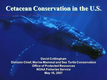 . Cetacean Conservation in the U.S. David Cottingham Division Chief, Marine Mammal and Sea Turtle Conservation Office of Protected Resources NOAA Fisheries.