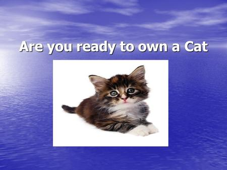 Are you ready to own a Cat. Answer 2 questions to test yourself to see if you are ready to own a Cat 1. Name ONE types of food for your cat? A.Wet food.