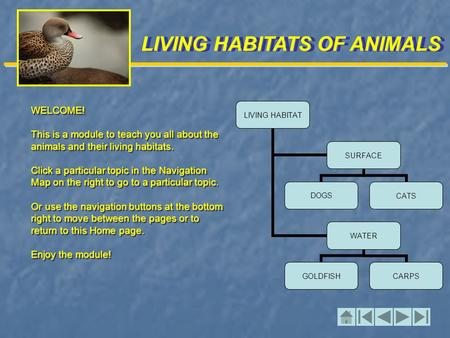 LIVING HABITATS OF ANIMALS WELCOME! This is a module to teach you all about the animals and their living habitats. Click a particular topic in the Navigation.