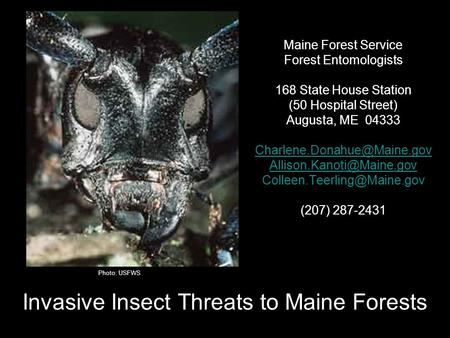 Springvale, ME Feb 26, 2009 Invasive Insect Threats to Maine Forests Maine Forest Service Forest Entomologists 168 State House Station (50 Hospital Street)