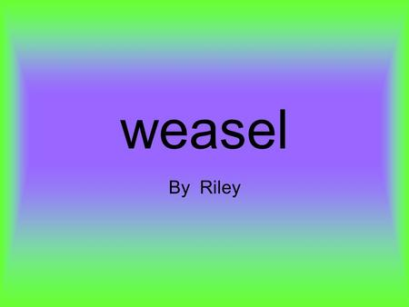 weasel By Riley 5 interesting facts Weasels are long and slender animals with long necks and short legs. They also have short tails They have large black.