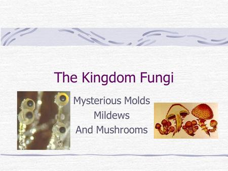 helpful and harmful fungi This feature is not available right now please try again later.