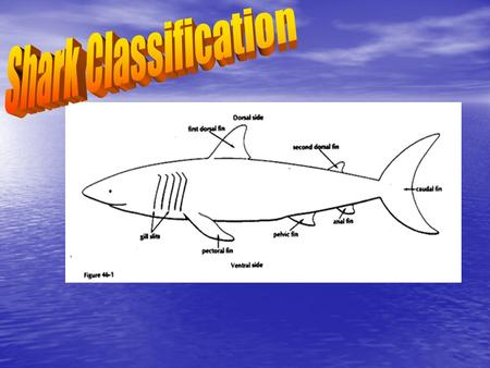 Shark Classification.