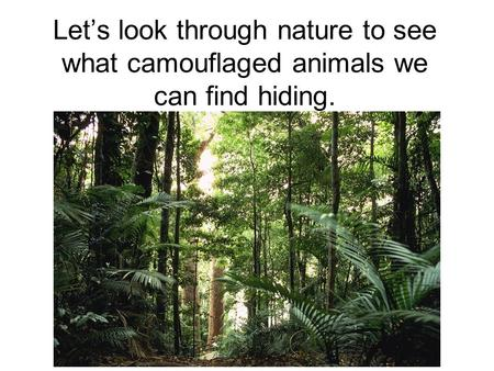 Lets look through nature to see what camouflaged animals we can find hiding.
