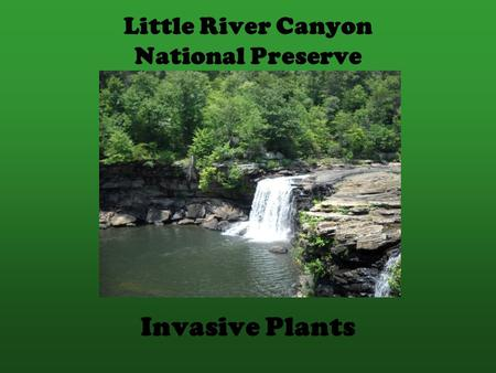Little River Canyon National Preserve Invasive Plants.