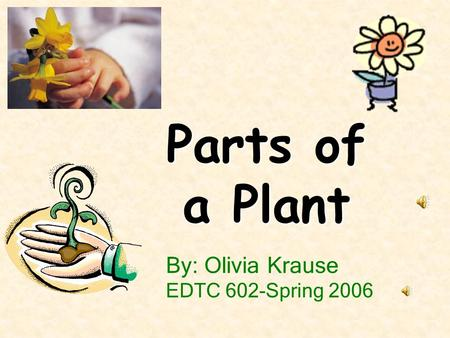 By: Olivia Krause EDTC 602-Spring 2006 Parts of a Plant.