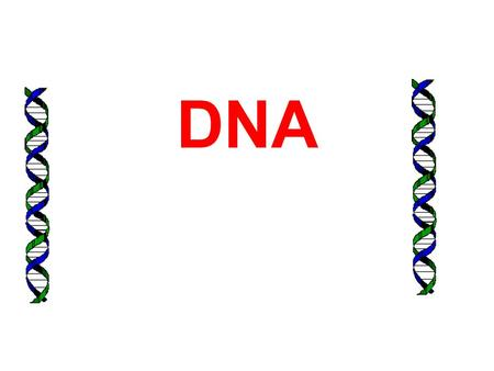 DNA. 2 DNA Functions Stores genetic information to build and maintain a living organism Copies itself.
