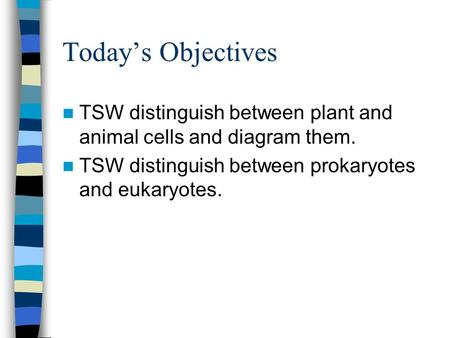 Today's Objectives TSW distinguish between plant and animal cells and diagram them. TSW distinguish between prokaryotes and eukaryotes.