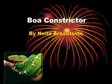 Boa Constrictor By Neila Arnautovic. There are five different groups of animals with vertebrates. Reptiles Mammals Fish Amphibians Birds.