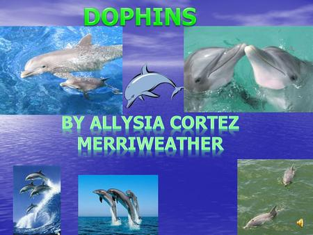 DOPHINS By Allysia cortez Merriweather.