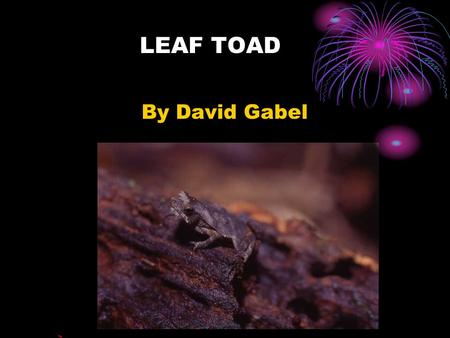 LEAF TOAD By David Gabel.