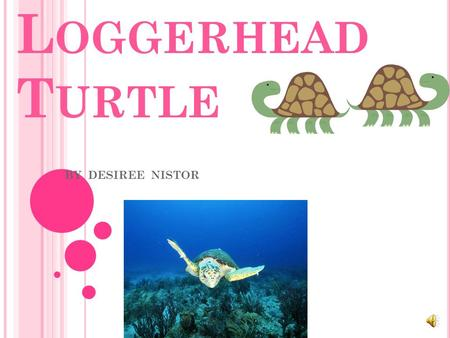 L OGGERHEAD T URTLE BY DESIREE NISTOR T HERE ARE FIVE DIFFERENT GROUPS OF ANIMALS WITH VERTEBRATES. Mammals Fish Reptile Birds Amphibians.