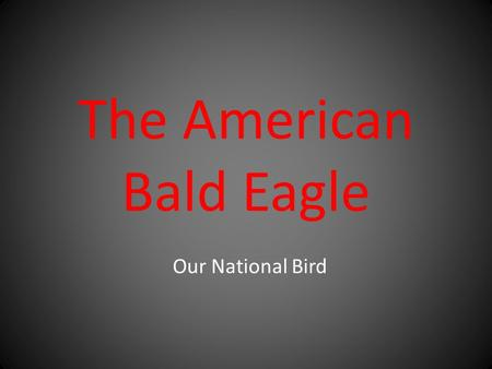 The American Bald Eagle Our National Bird. Bald eagles have 7,000 feathers.