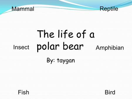 By: taygan The life of a polar bear Mammal Reptile BirdFish Insect Amphibian.