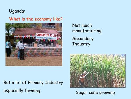 Uganda: What is the economy like? Not much manufacturing Secondary Industry But a lot of Primary Industry especially farming Sugar cane growing.