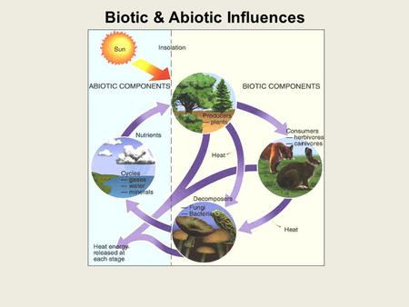 Biotic & Abiotic Influences
