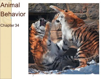 Animal Behavior Chapter 34 /. What is a behavior? Any response to a stimulus (an external signal) Examples of stimuli Sounds Smells Sights (light vs dark)