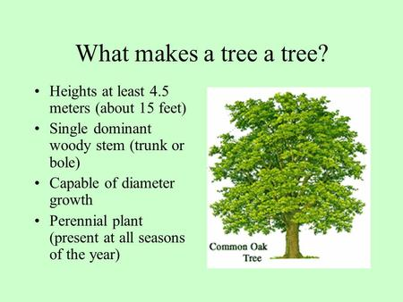What makes a tree a tree? Heights at least 4.5 meters (about 15 feet) Single dominant woody stem (trunk or bole) Capable of diameter growth Perennial plant.