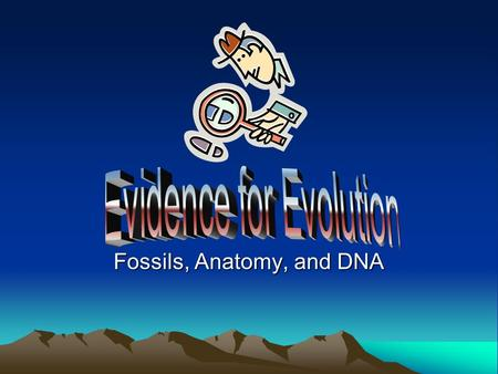 Fossils, Anatomy, and DNA. Evidence for Evolution Three types of evidence: –Fossils –Anatomical –Molecular.