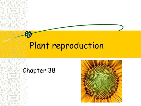 Plant reproduction Chapter 38.