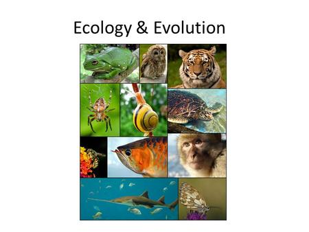 Ecology & Evolution. 7 billion people and growing.