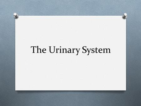 The Urinary System. Functions of the Urinary System O Three Major Functions O Excretion: The removal of organic waste products from body fluid. O Elimination: