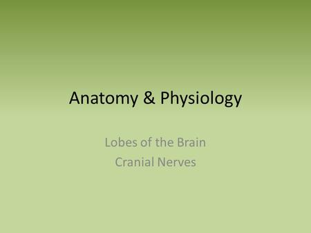 Anatomy & Physiology Lobes of the Brain Cranial Nerves.