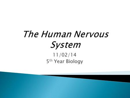 11/02/14 5 th Year Biology.  Recall that the nervous system can be broken down into the Central Nervous System (CNS) & the Peripheral Nervous System.