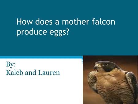 How does a mother falcon produce eggs? By: Kaleb and Lauren.