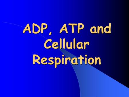 ADP, ATP and Cellular Respiration
